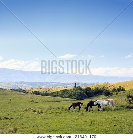 CORDOBA, ARGENTINA. Beautiful photograph taken in the sierras of Cordoba, Argentina. Valley of Calamuchita, near Villa Yacanto. Field with horses, trees and green lawn. The mountains on the horizon.