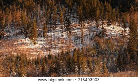 Colourful winter in snowy Tatra Mountains in Lesser Poland