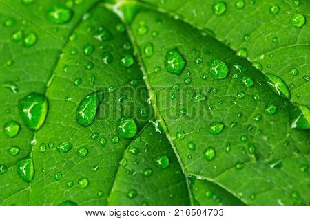 Macrophotography of drops of rain on a green leaf