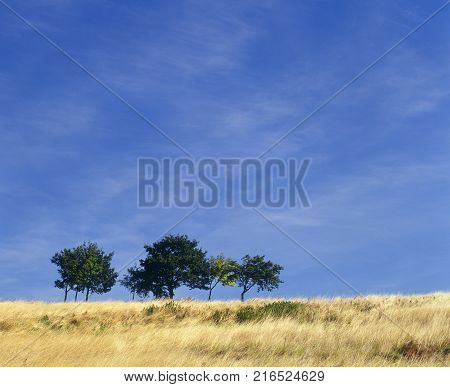 TRESS ON HORIZON IN FIELD ON SUMMERS DAY
