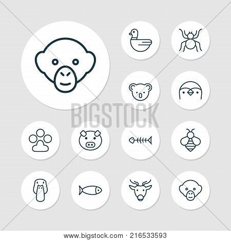 Nature icons set with claw print, duck, marsupial and other bumblebee elements. Isolated vector illustration nature icons.