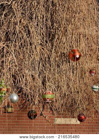Multicolor Christmas ornaments hanging from dead branches of dead weeping willow tree making a contrast with birth of Christmas and dead tree