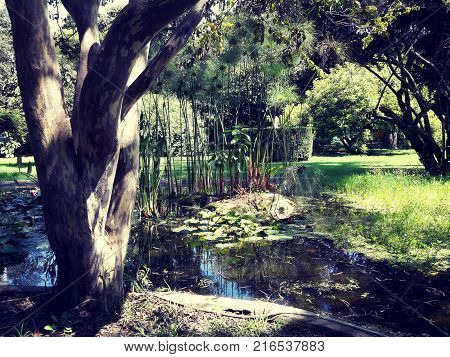Pond with trees and aquatic green plants