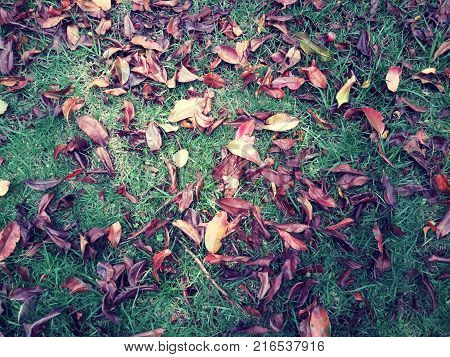 Green grass and dry leaves on fall season