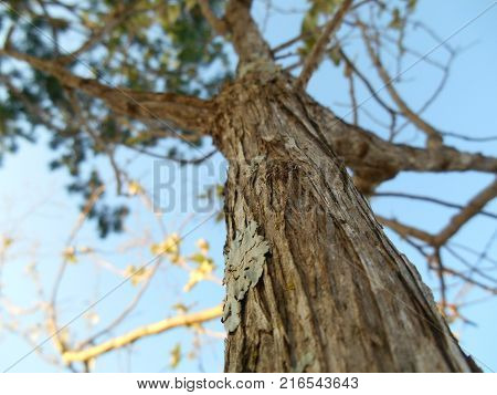 A tree trunk, details of a tree.