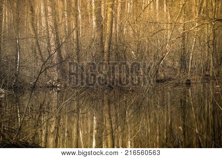 A forest river in a spring forest. Spring landscape. Deciduous trees and their reflection