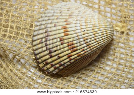 a large sea shell on the abrasive background