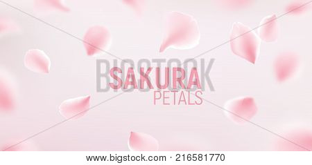 Pink sakura petals falling flower vector background. Romantic blossom sakura flower petals.