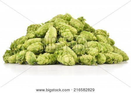 Heap of fresh green hops (Humulus lupulus) isolated on white background. Pile of hops ingredient for brewery industry.