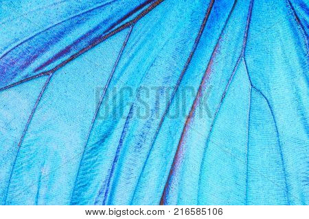 Detailed macro photo of a shiny blue tropical butterfly (morpho didius) wing