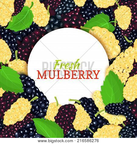 Round white label on ripe mulberry and leaves background. Vector card illustration. Berries fresh and juicy mulberry frame for design of food packaging juice breakfast, cosmetics, tea, detox diet