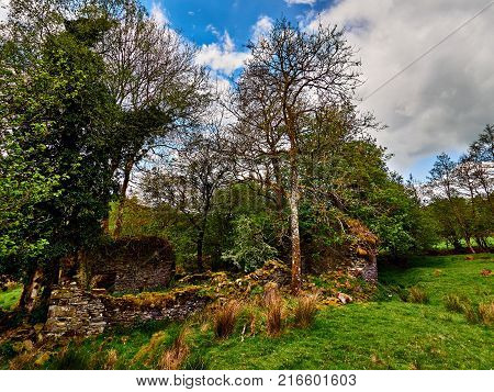 Ruins of Welsh farm homestead at Cae-garw in a picturesque valley near Cellan Ceredigion Wales. The ruin is set in meadows and can be accessed on a footpath that runs by a stream called Ffrwd Cynon.