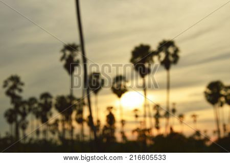 blur of silhouette toddy palm tree on sunset sky in paddy field
