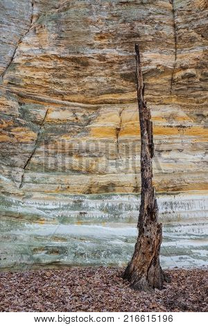Deep inside Illinois Canyon the glowing St. Peter Sandstone cracked walls surround a burnt-out tree. Once a home to birds insects and small animals the charred tree truck now precariously rises above fallen autumn leaves