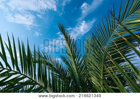 Palm tree leaves against blue sky as copy space for summer holiday and vacation background
