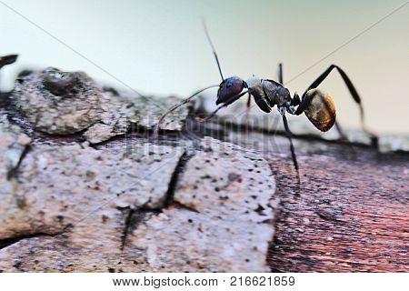 Foto macro de formiga sobre tronco de árvore
