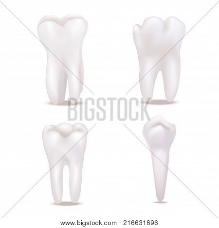 Realistic Detailed 3d White Healthy Teeth Icons Set Different Types View Protection Enamel. Vector illustration