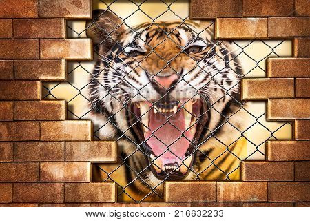 Growl siberian tiger internal the cage in concept of resist detain and torture the wildlife