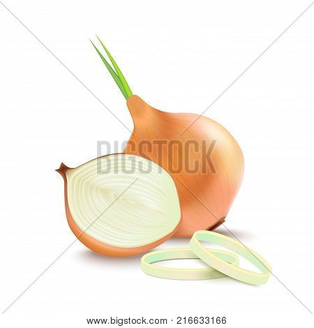 Realistic Detailed 3d Whole Bulb Onion and Slice Closeup View Isolated on White Background Raw Healthy Food. Vector illustration