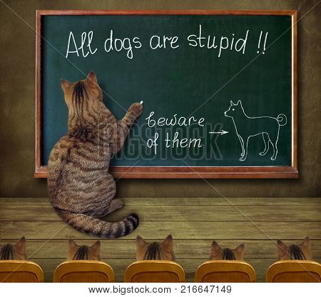 The cat teacher wrote on a blackboard