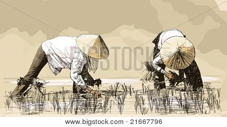Vector illustration of an hand drawing - Two women harvesting rice in asia