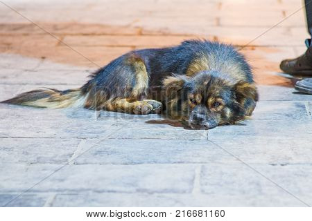 A sad stray dog lying on a stone brick street at night