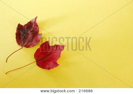 Red Leaves Yellow Paper