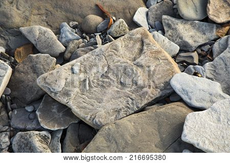 Fossilized stone at World Heritage SIte Joggins Fossil Cliffs Nova Scotia Canada.