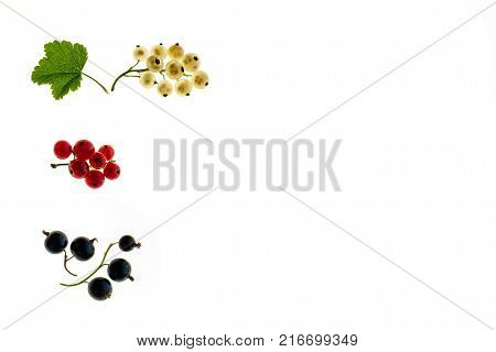 red currant, white currant and black currant berries on white background with copy space