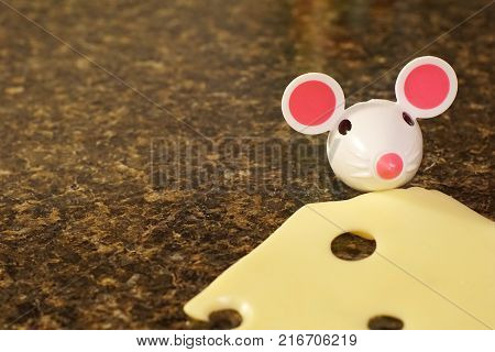 Small mouse head nibbling on Swiss cheese.