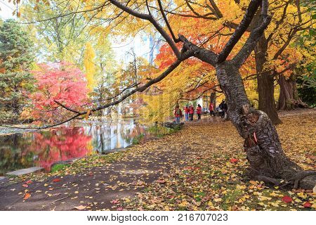 SAPPORO JAPAN - OCTOBER 26TH 2017. Tourists enjoying the autumn colors of trees at park near the former Hokkaido government office Sapporo Japan.