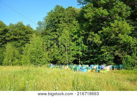 Apiculture beekeeping in the forest. Cozy Colorful Beehives for Honey Bee Raw Linden Honey.