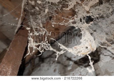 Spider Web, spider, Spider Web Dungeon roomterrible room