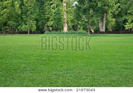 Grass Field And Trees