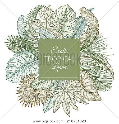 Background with different exotic tropical leaves and jungle palms. Hand drawn vector illustrations. Exotic tropical plant palm, floral jungle leaf