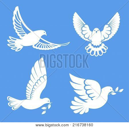 Pigeon or dove, white bird flying with spread wings in sky or sitting set. Vector logo template or isolated symbol icon of peace freedom or post mail delivery and tattoo