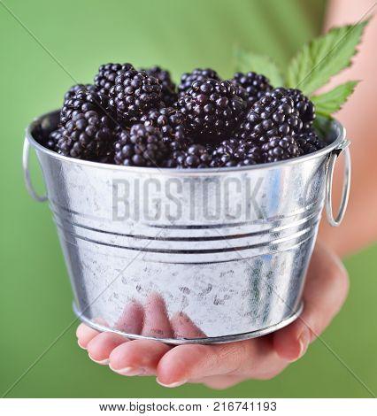 Blackberries in a small metallic bucket held in woman hand - closeup