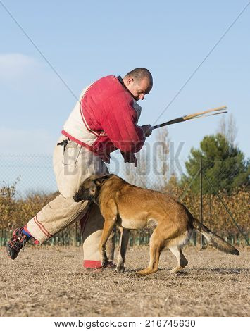 training of police dog in the nature