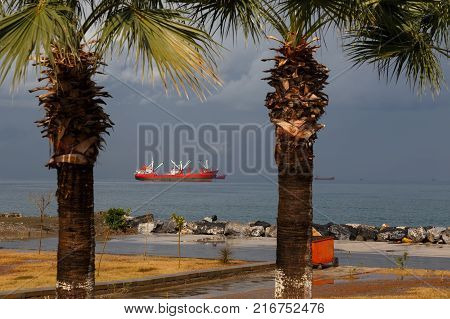 Seaview from the shore with palms and red cargo ship