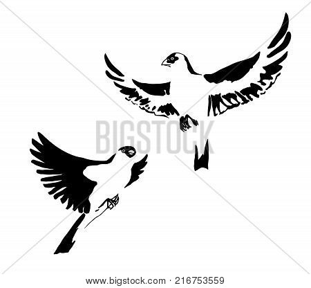 Two hand drawn black stylized birds painted by ink. Grunge style. Vector illustration. Isolated on white background.