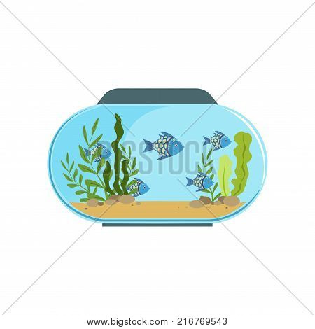 Aquarium in round shape with blue exotic fishes. Freshwater fish tank with seaweed and stones on sand. Underwater world concept. Colorful flat vector illustration isolated on white background.