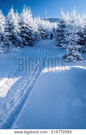 snow covered hiking trail wizh frozen trees around to Lysa hora hill in Moravskoslezske Beskydy mountains in Czech republic during winter freezing day with clear sky