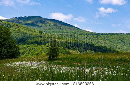 Grassy Field With Daisies On Hillside