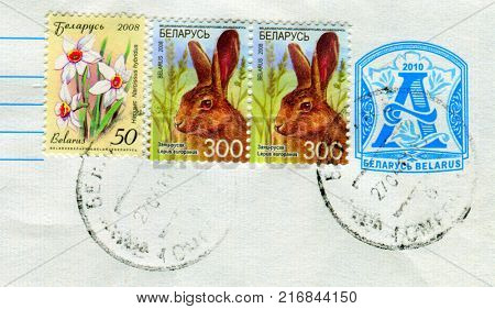 GOMEL, BELARUS, 30 NOVEMBER 2017, Stamp printed in Belarus shows image of the Lepus europaeus and Narcissus hybridus, circa 2008.