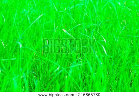 Green grass background texture with blurred and hazy effects