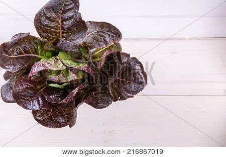 Lettuce red salad on white wooden backround