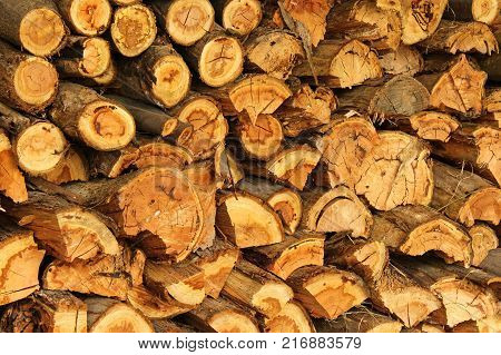 a plie of firewood, cut ready for Winter