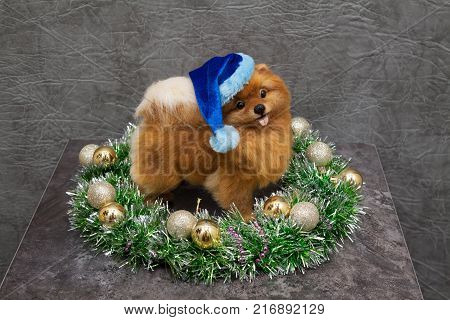Funny yellow pomeranian dog inside christmas wreath