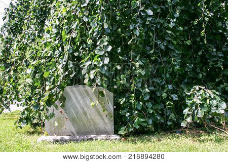 Blank gravestone in the cemetery among the trees