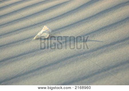 White Solitude 2. Shell Series.